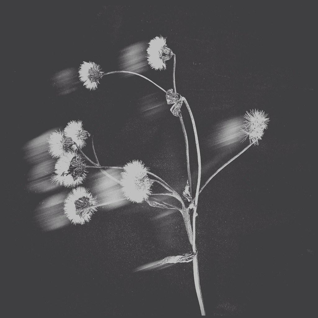 Fantôme de fleur
