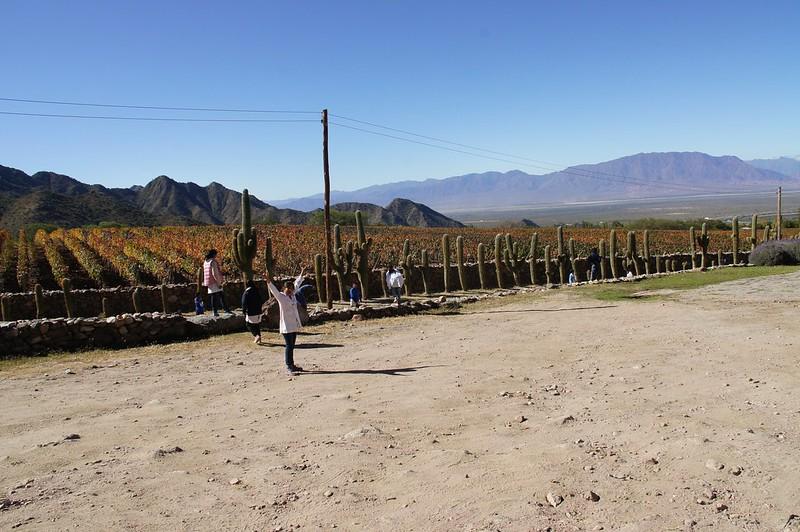 Proyecto Circópolis Yacochuya