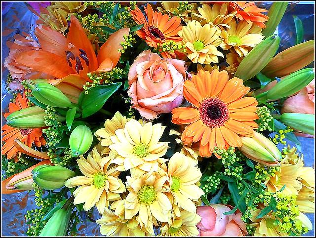 Multi-Coloured Flowers ..