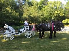 Avon Lake what a beautiful wedding