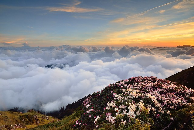 Sea of clouds at Mountain Hehuan 合歡山