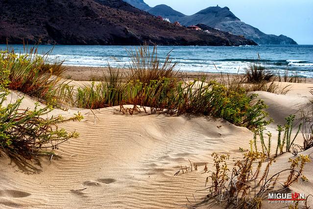 Entre dunas. Playa de los Genoveses. Cabo de Gata.