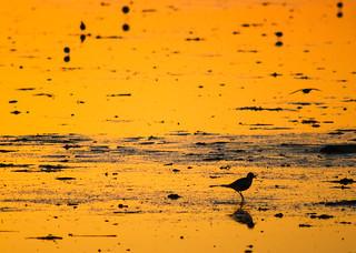 Bolivar Flats at Daybreak