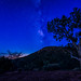 Milkyway Tree by CEBImagery.com