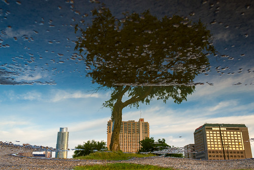 usa reflection tree water clouds austin puddle texas unitedstates tx austonian