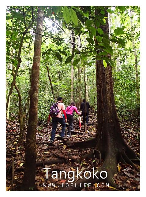 Meyusuri hutan tangkoko