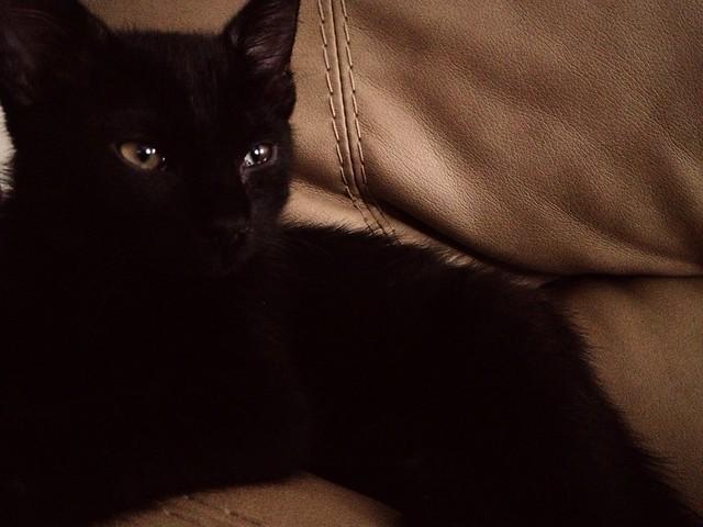 Black Cat Nikki Sun Hot Threesome