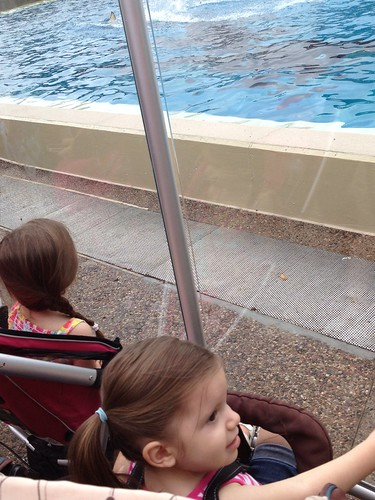 Lex & Ava Sea World