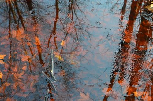 Fall by Malika Ladak