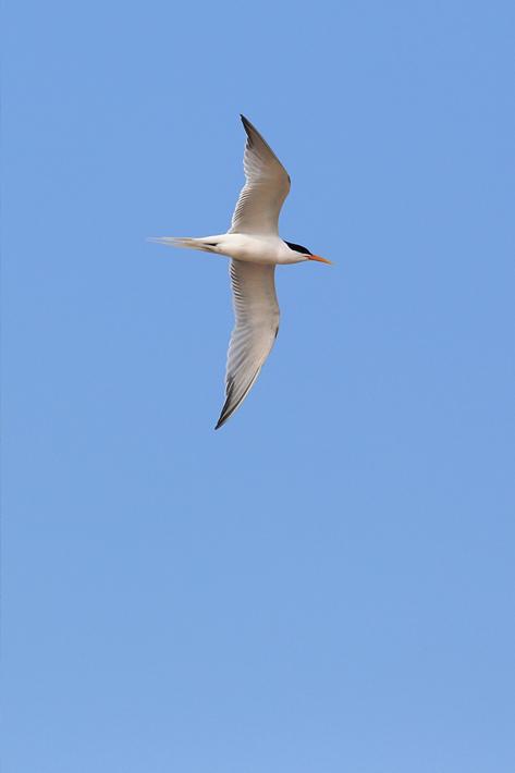 042713_birding07_elegant