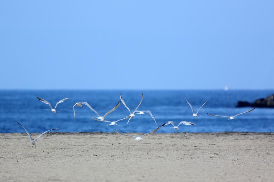 042713_birding06_terns