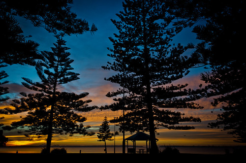 blue trees sunrise colours silhouettes norfolkislandpines fotocompetition fotocompetitionbronze fotocompetitionsilver