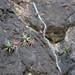 Rock with small agaves, long roots and globular cacti; camino entre Guevea de Humboldt y Santa María Guienagati, Distrito Tehuantepec, Región Istmo, Oaxaca, Mexico por Lon&Queta