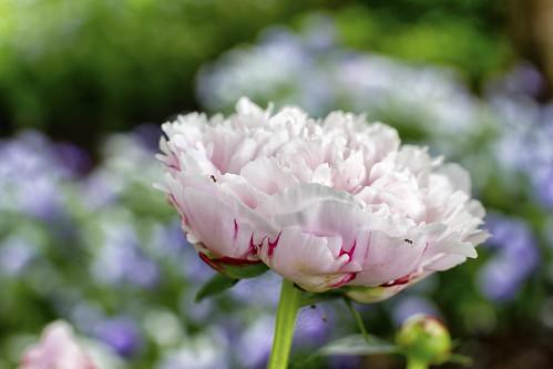 06-13 flowers-4856-Edit-22