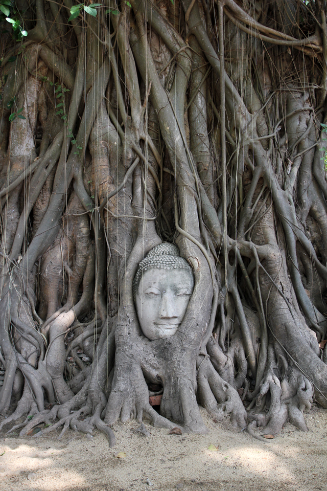 Head of Buddha at Wat Mahathat (วัดมหาธาตุ)