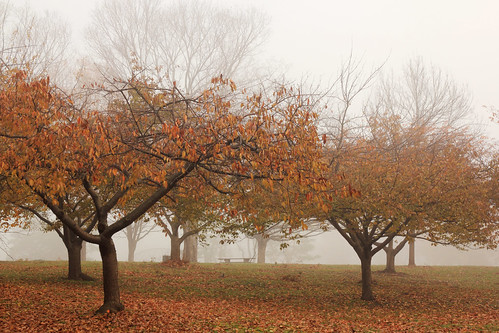park autumn mist tree fall fog newjersey day foliage rahway rahwayriverpark