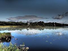 Llyn Llech Owain Country Park 19th Aug 2013  (34)