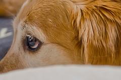NO al maltrato de animales