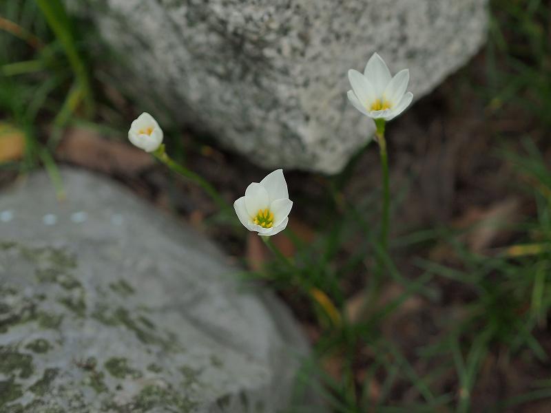 P9102569.jpg-1