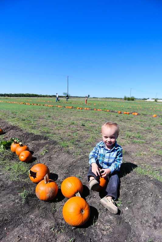 Big Orange Pumpkin Farm-18.jpg