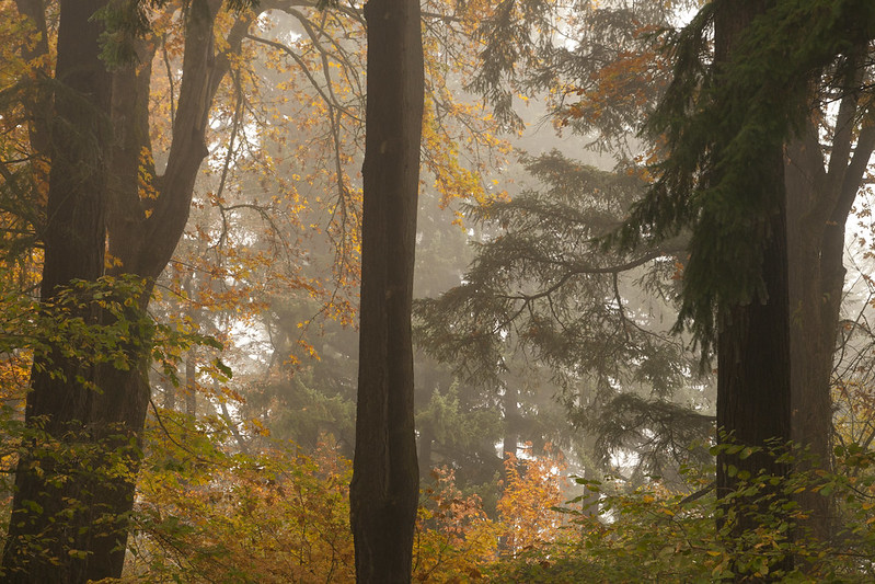 foggy forest by gravel garden