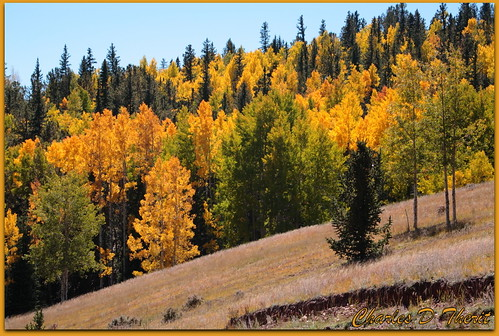 5d aspens autumn canon colorado coloradosprings explore goldcamproad superzoom unitedstates usa victor yellow supershot landscape cityscape seascape scape landscapes america northamerica telephoto classic eos5d eos5dclassic 5dclassic 5dmark1 5dmarki co tree trees treescape teller county united states north fall season color best wonderful perfect fabulous great photo pic picture image photograph