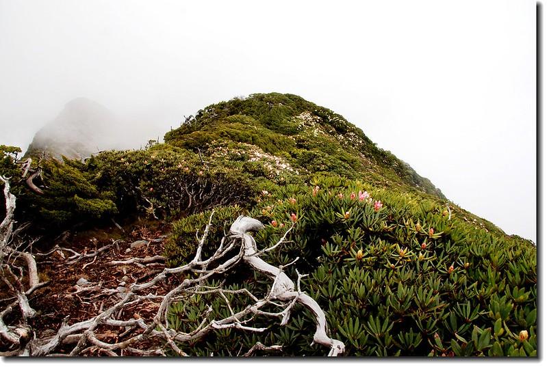 神秘的聖稜線 1