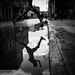 Los Habaneros #1 by Thomas Leuthard