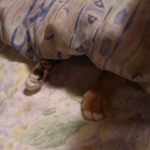 なぜか掛け布団から両手だけ出しているあーちゃん by Chinobu