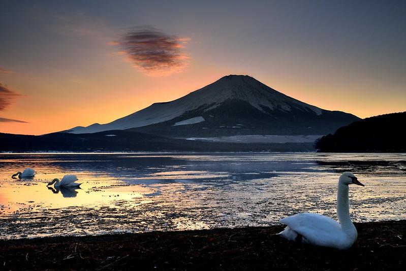 山中湖白鳥と夕焼け