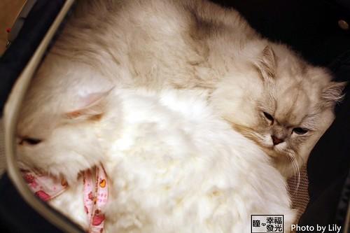 cat_5th (63)