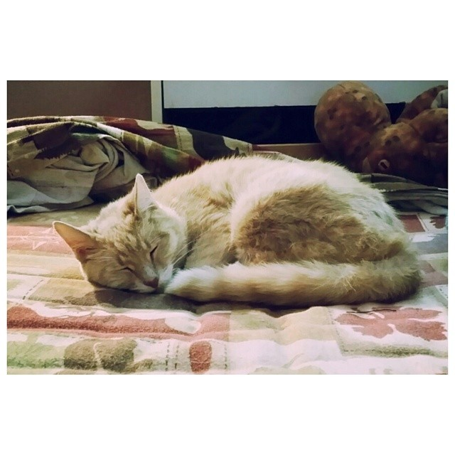Sleepy peep. #cute #sleepy #cat #instagood #instawesome #love #somanyfeels #omigod #myheart