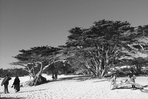 Carmel by the Sea - Cypress