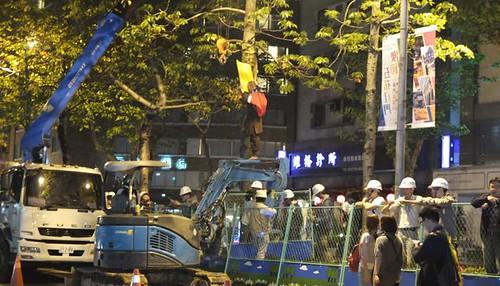移植路樹工程爆發衝突