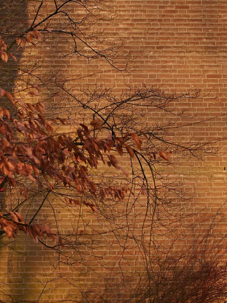 登博斯 冬季 Den Bosch Winter