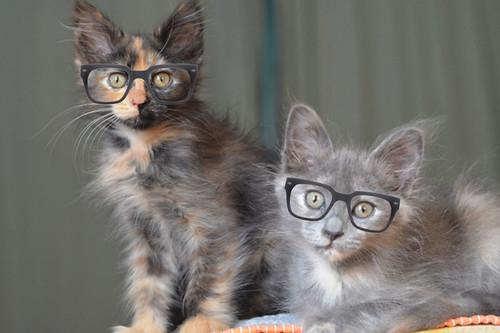 Claudette_Cosette_glasses