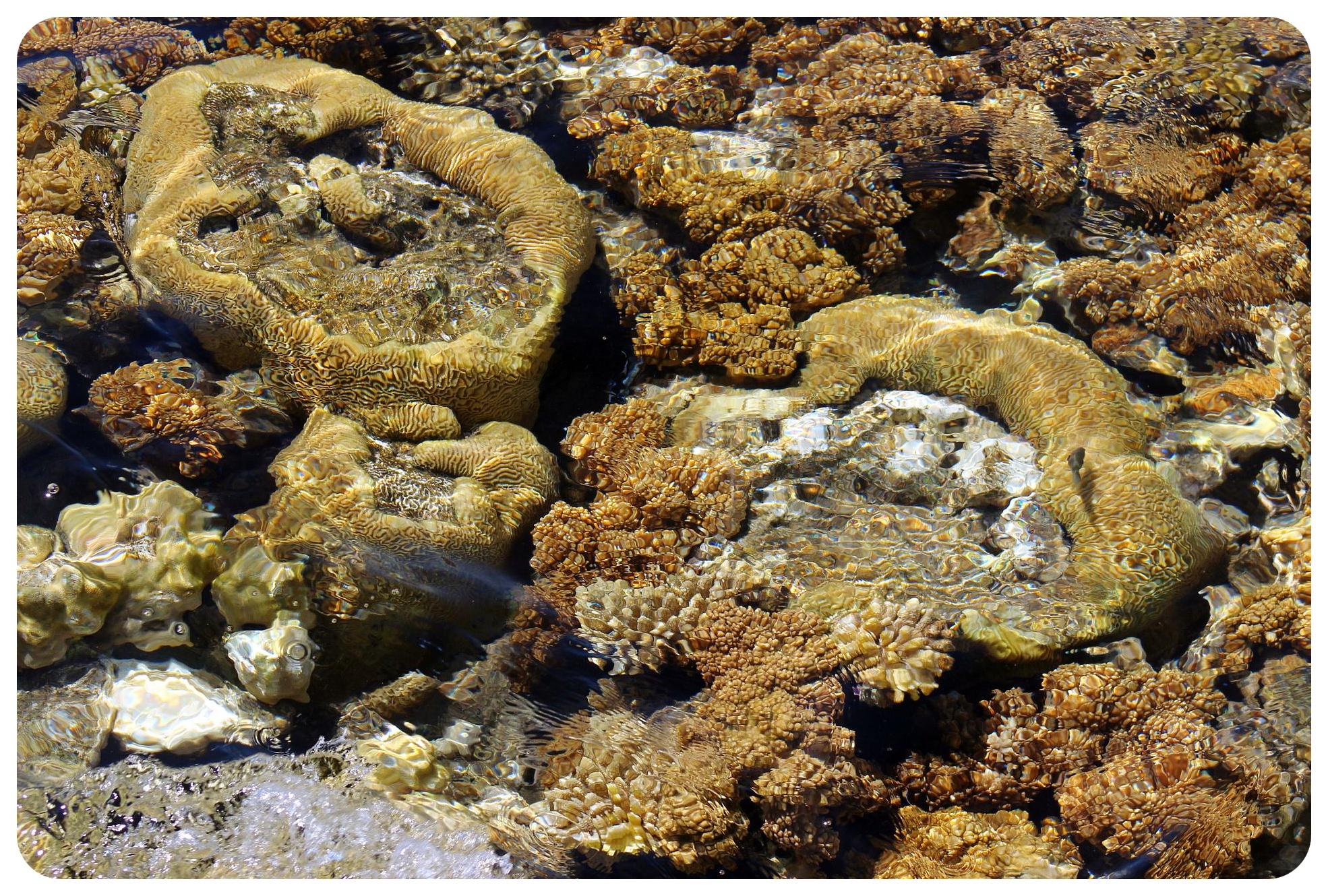 coral reef eilat israel