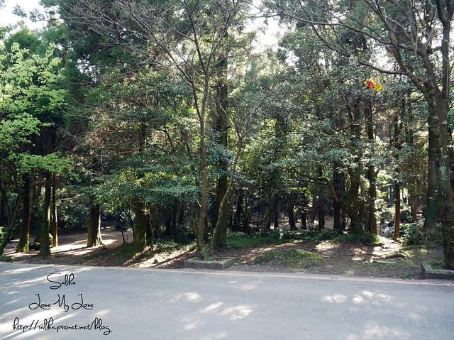 陽明山免費婚紗景點黑森林 (6)