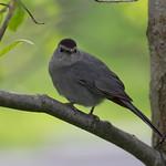 Bird, NYBG
