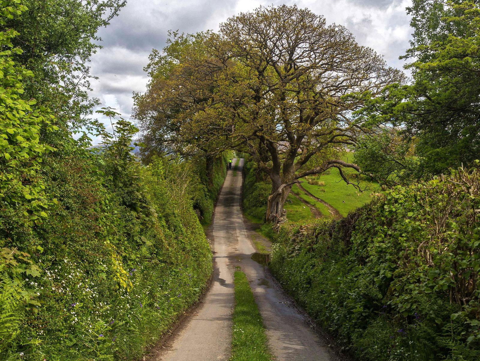 Jordan Lane near Sedbergh, Yorkshire Dales