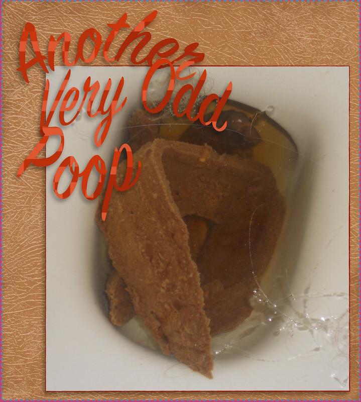 Anohter Very Odd Poop