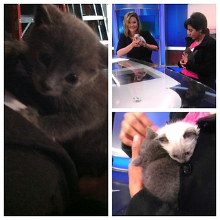 #kvpnewsroom @AnneMakovec with softy, furry kitties from @SFACC