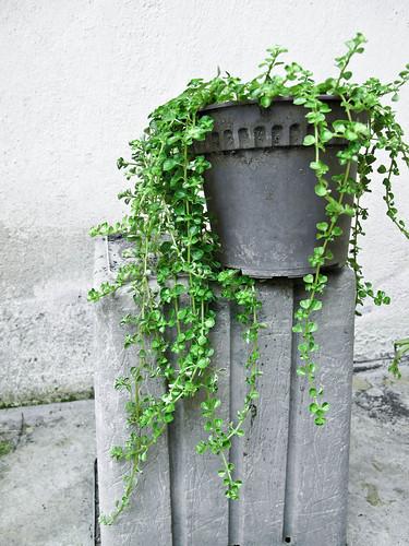 IMG_1144 green