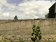 Vandoeuvre Village 032