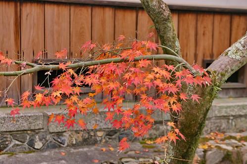 【写真】紅葉 : 等持院