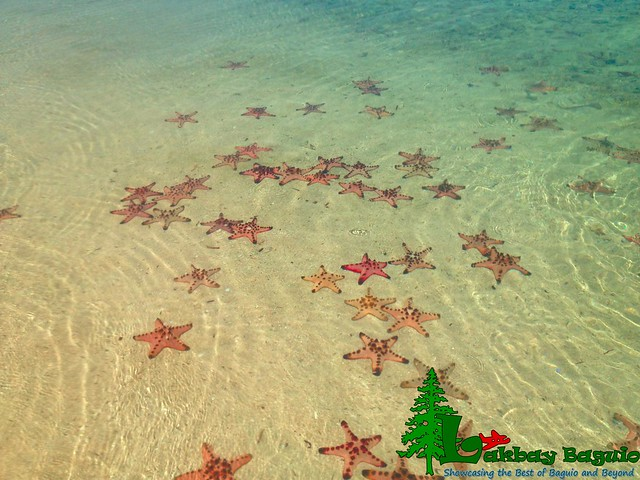 honda-bay-starfish-island-3