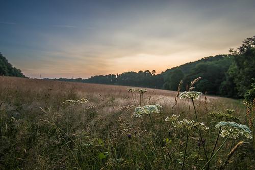 morning summer grass meadow worcestershirewildlifetrust theknappandpapermill