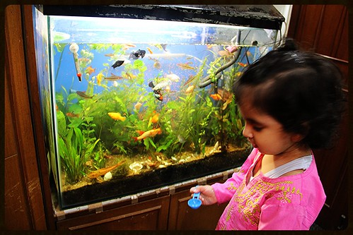 Nerjis Feeds The Fishes by firoze shakir photographerno1
