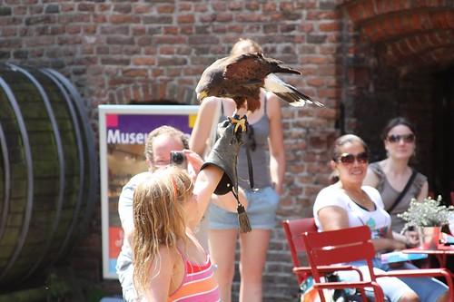 Muiderslot - falcoaria