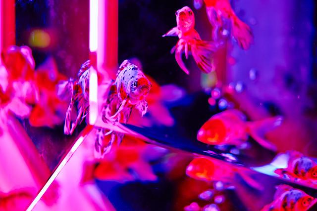 Art Aquarium 2013 6/23